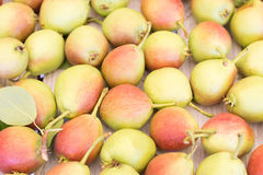 Ripe sweet yellow red pears background Stock Images