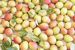 Ripe sweet yellow red pears background royalty free stock image