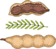 Ripe Tamarind in Cross Section and Whole Royalty Free Stock Image