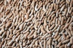 Ripe tamarind pods Stock Photo