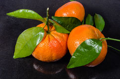 Ripe tangelos with leaves on black counter Royalty Free Stock Photography