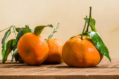 Ripe tangelos with leaves on table Stock Photography