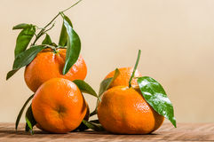 Ripe tangelos with leaves on table Royalty Free Stock Photos
