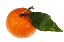 Ripe tangerine Royalty Free Stock Photo