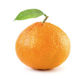Ripe tangerine Royalty Free Stock Photos