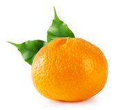 Ripe tangerine with green leaves Royalty Free Stock Photography