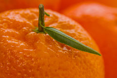 Ripe tangerine with leaf, close up Royalty Free Stock Photography