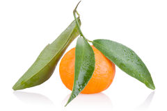 Ripe tangerine with leaves Stock Photo