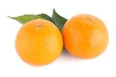 Ripe tangerine or mandarin Royalty Free Stock Images