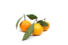 Ripe tangerine Royalty Free Stock Image