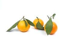 Ripe tangerine Royalty Free Stock Photo