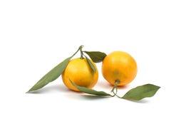 Ripe tangerine Royalty Free Stock Photography