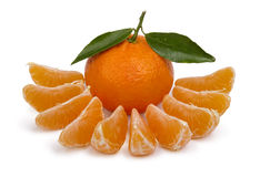 Ripe tangerines Stock Images
