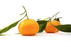 Ripe tangerines Stock Photo