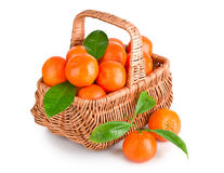 Ripe tangerines with leaves in basket Royalty Free Stock Image
