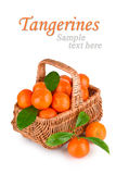 Ripe tangerines with leaves in basket Royalty Free Stock Photography