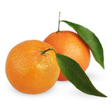 Ripe tangerines with leaves Royalty Free Stock Photos