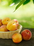 Ripe Tasty Apricots in the Basket on the Old Wooden Table Royalty Free Stock Images