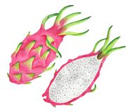Ripe tasty dragon fruit sectional view. Watercolour illustration. Hand-painted fruit. Isolated illustration Royalty Free Stock Photo