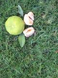 Ripe mandarins in green grass Stock Photography