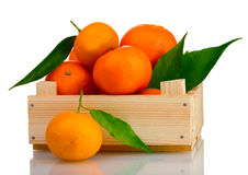 Ripe tasty tangerines with leaves in wooden box Stock Images