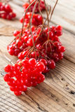Ripe tasty viburnum Royalty Free Stock Photography