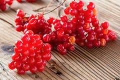 Ripe tasty viburnum Royalty Free Stock Photography