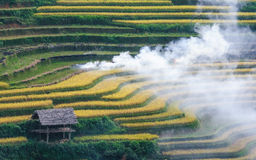Ripe terraced field and smoke. Mu Cang Chai, Yen Bai, Vietnam Royalty Free Stock Photos