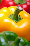 Ripe three color pepper Royalty Free Stock Photos