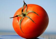 Ripe tomato royalty free stock photos