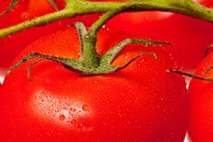 Ripe tomato background Stock Photos