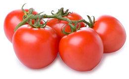 Ripe tomato on a branch. On white background Stock Photos