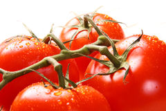 Ripe tomato branch over white Royalty Free Stock Image