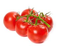 Ripe tomato on bunch with water drops Stock Photos
