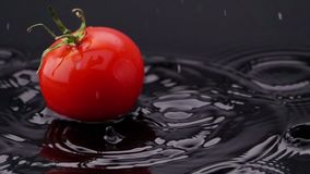 Ripe tomato falls on the table. Video of ripe tomato falls on the table stock video
