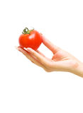 Ripe tomato in his hand a young girl. Isolated on white background Stock Image