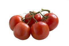 Ripe Tomato isolated on white background Stock Photography