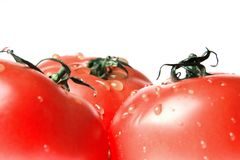Ripe tomatoes. Three ripe tomatoes covered bright drops on a white background Royalty Free Stock Photography