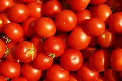 Ripe tomatoes. Royalty Free Stock Photography