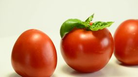 Ripe tomatoes with basil stock video