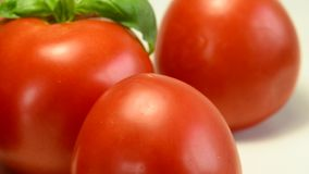 Ripe tomatoes with basil stock video footage