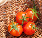 Ripe tomatoes on basket Royalty Free Stock Photos