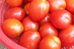 Ripe tomatoes in basket Royalty Free Stock Photos