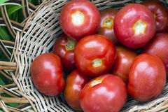 Ripe tomatoes in a basket Royalty Free Stock Photography
