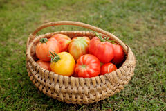 Ripe tomatoes in a basket on grass background Stock Photo