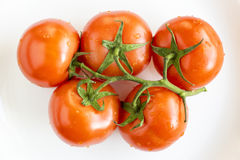 Ripe tomatoes on branch Royalty Free Stock Photos