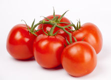 Ripe tomatoes on a branch on white Royalty Free Stock Image