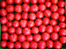 Ripe tomatoes of bright red color of the small size. Royalty Free Stock Photo