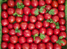 Ripe tomatoes of bright red color of the small size. Stock Photography