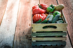 Ripe tomatoes and cucumbers Royalty Free Stock Photography